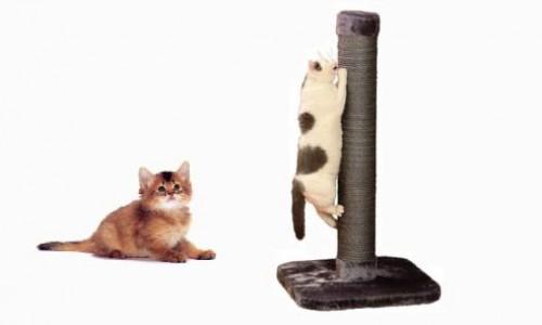 """<h2><a href=""""http://e-kako.geek.hr/dom/kako-napraviti-grebalicu-za-vaseg-macica/"""">Kako napraviti grebalicu za vašeg mačića?<a href='http://e-kako.geek.hr/dom/kako-napraviti-grebalicu-za-vaseg-macica/#comments' class='comments-small'>(0)</a></a></h2>Mačke imaju urođenu potrebu za grebanjem stvari. Kako bi zaštitili svoje pokućstvo i uštedjeli nešto novca izradite svojoj mački njenu vlastitu grebalicu. Zavirite u podrum ili špajzu i pokušajte naći"""
