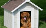Kako napraviti kućicu za psa?