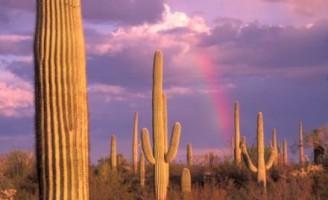 Kako kaktus živi bez vode?