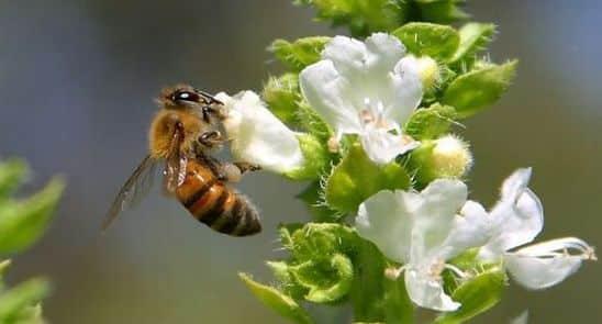 kako-pcele-proizvode-med