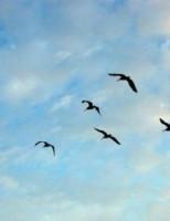 Kako ptice znaju kada se trebaju seliti?