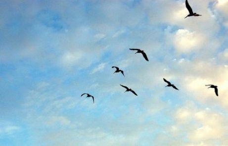 kako-ptice-znaju-kada-se-treba-seliti