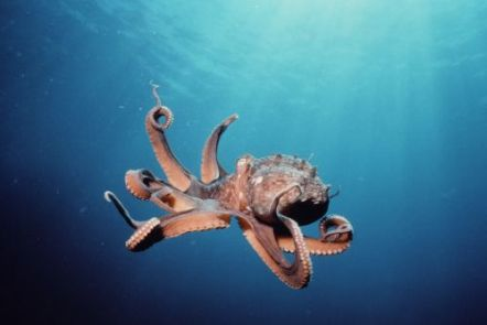 kako-se-hobotnica-krece