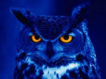 kako-sova-vidi-nocu