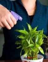 Kako dati biljkama dosta vode, ako vas nema doma?