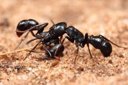 kako-zive-mravi