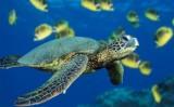 Kako se kornjače brane?