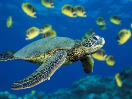 kako-se-kornjace-brane