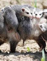 Kako životinje brinu za svoje mlade?