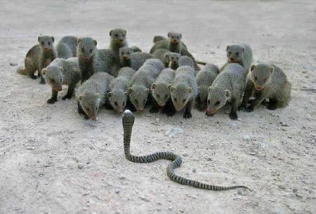 kako-izgleda-zajednica-zivotinja