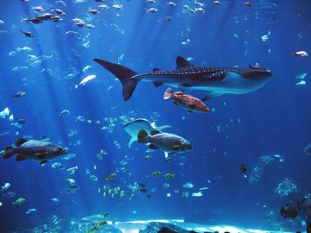 kako-postaviti-akvarij