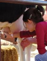 Kako se dobiva mlijeko?