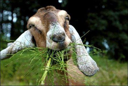 kako-se-koze-hrane