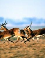 Kako se životinje kreću?