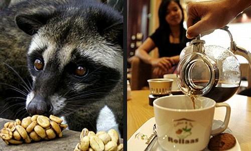 Kako se proizvodi najskuplja kava na svijetu?