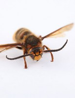 Kako reagirati kod uboda insekata?