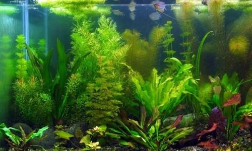 Kako odabrati biljke za akvarij?