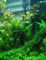 Kako održavati biljke u akvariju?