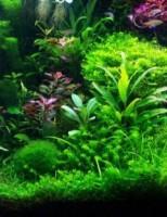Kako saditi biljke u akvariju?