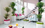 Kako održavati sobne biljke ?