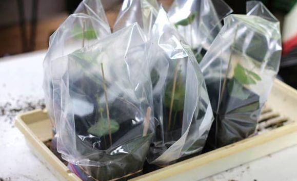 kako-odrzavati-sobne-biljke-3