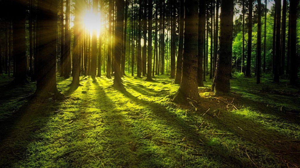Tvrtka Apple će uložiti 200 milijuna dolara u obnovu šuma