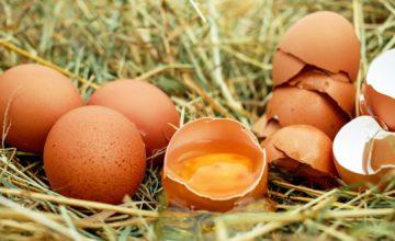 Svako jutro jedno jaje odraslima snagu daju, a što je s djecom?