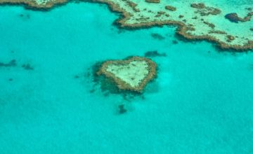Ima li nade za Veliki koraljni greben?