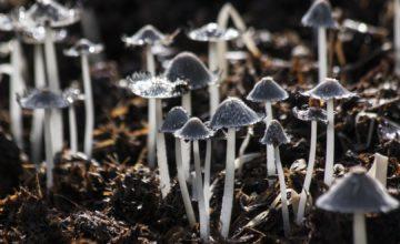 Znanstvenici proučavali komunikaciju bakterija i gljiva pa ostali iznenađeni!