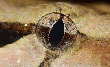 Stručnjaci upozoravaju: Pazite se 'zmijskog cara'