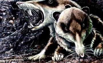 Cronopio vjeverica