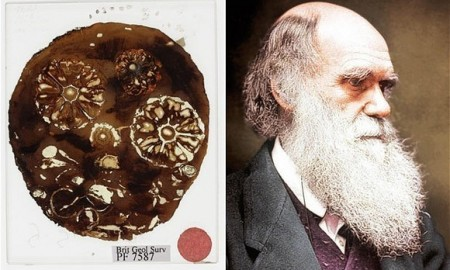 charles-darwin-fosili