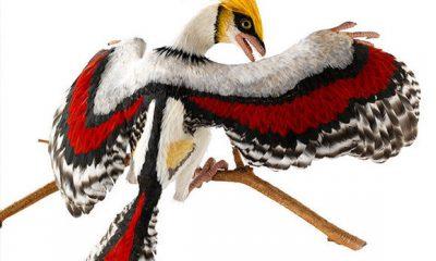 Prikaz Archaeopteryxa
