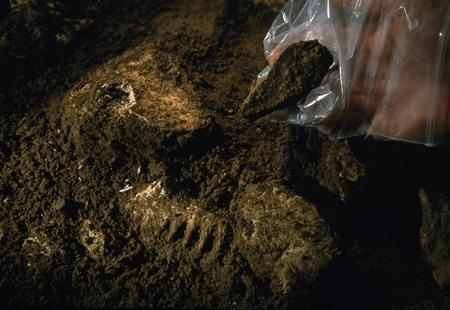 Iskapanje kostura hobita