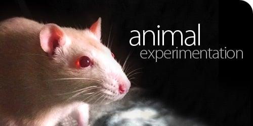 eksperimentiranje na životinjama