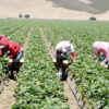 poljoprivreda-ozon