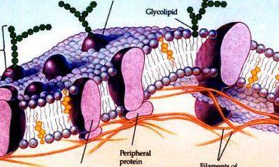 glycoprotein_g
