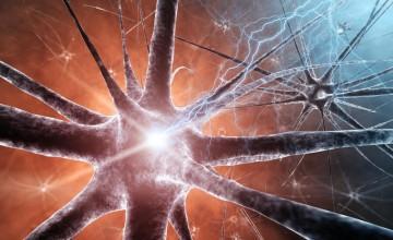 Ilustracija neurona. (Credit: © nobeastsofierce / Fotolia)