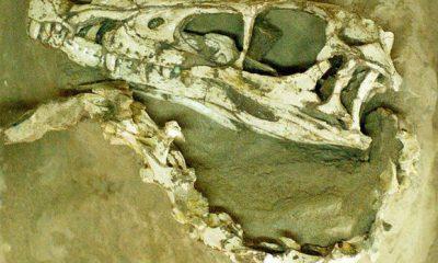 ostatci-dinosaursa