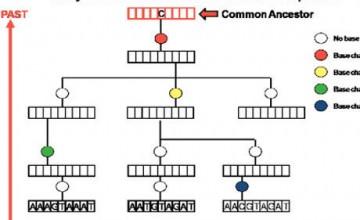 sek_genom