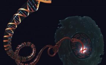 DNK molekula (Credit: NHGRI)