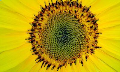 Fibonaccijev niz