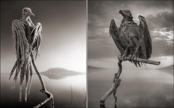 kalcificirane-ptice2