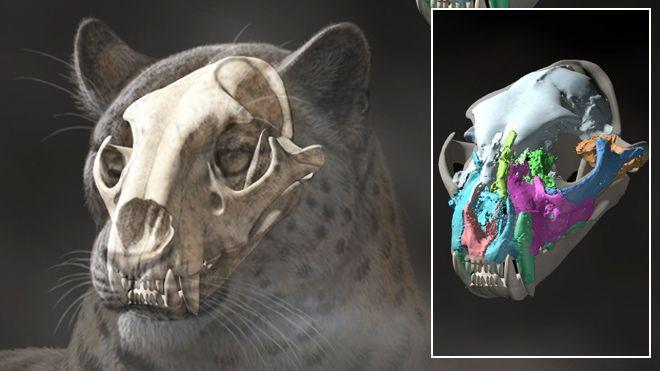 2 glavna načina datiranja fosila izlazi na ultrazvuk trudna