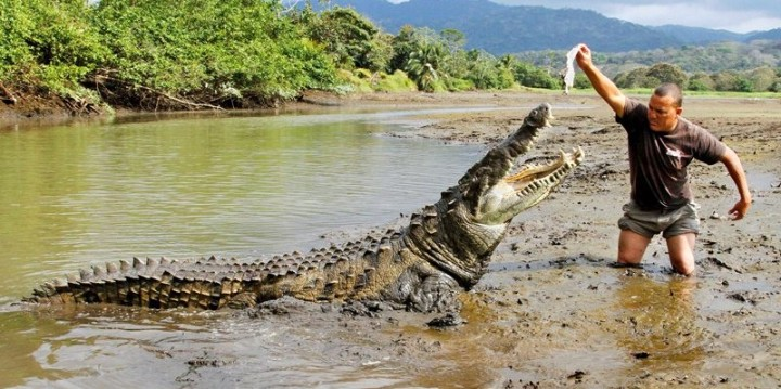 krokodil-prirodna-selekcija