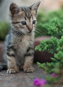Astrobiologija mačka u prirodi