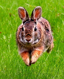 Astrobiologija zec u prirodi
