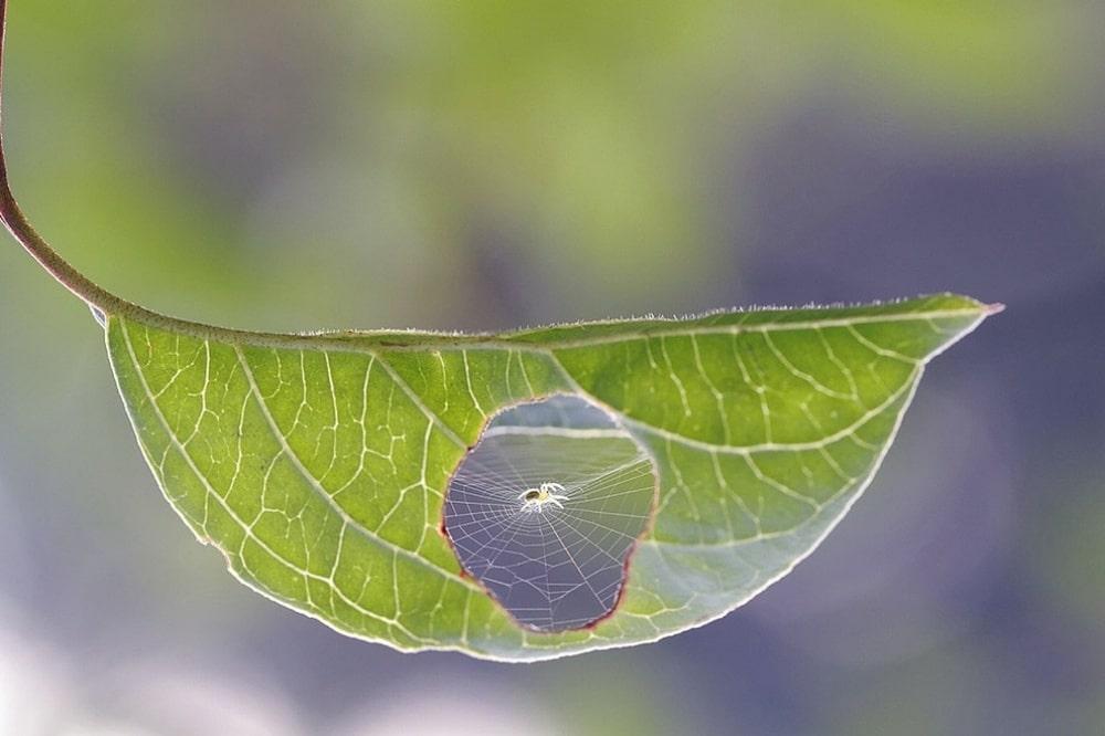 List i paukova mreža