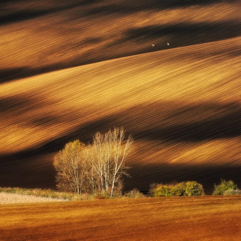Moravska polja u Češkoj