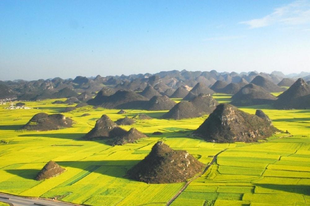 Polja uljane repice u Kini